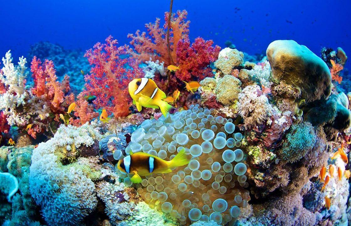mercan resifleri