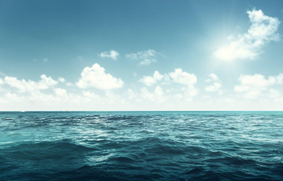 Deniz ve Okyanuslarda Biyoçeşitlilik
